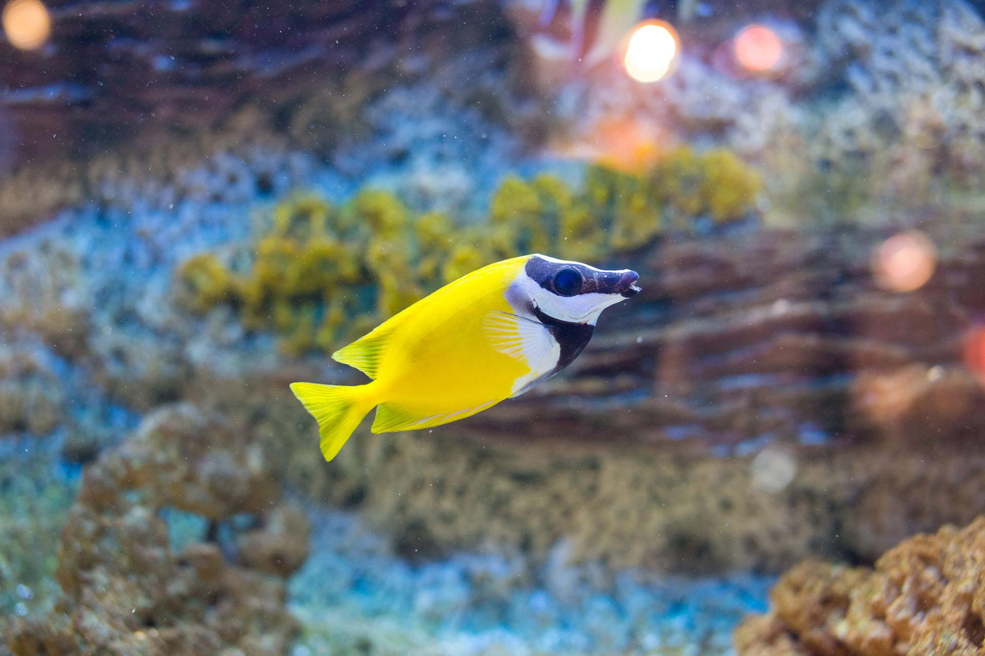 Welche fische fressen schnecken wie ernhren sich for Muscheln gartenteich